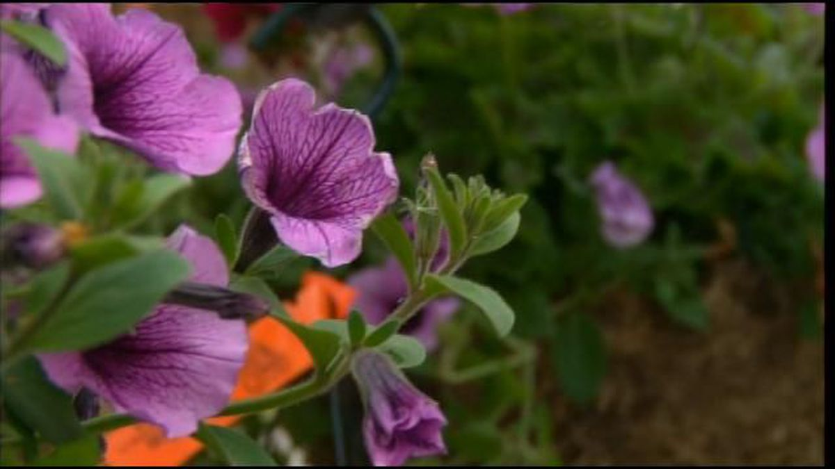 Waiting to clean your garden can benefit your yard according to the Cuyahoga Soil Water Conservation District