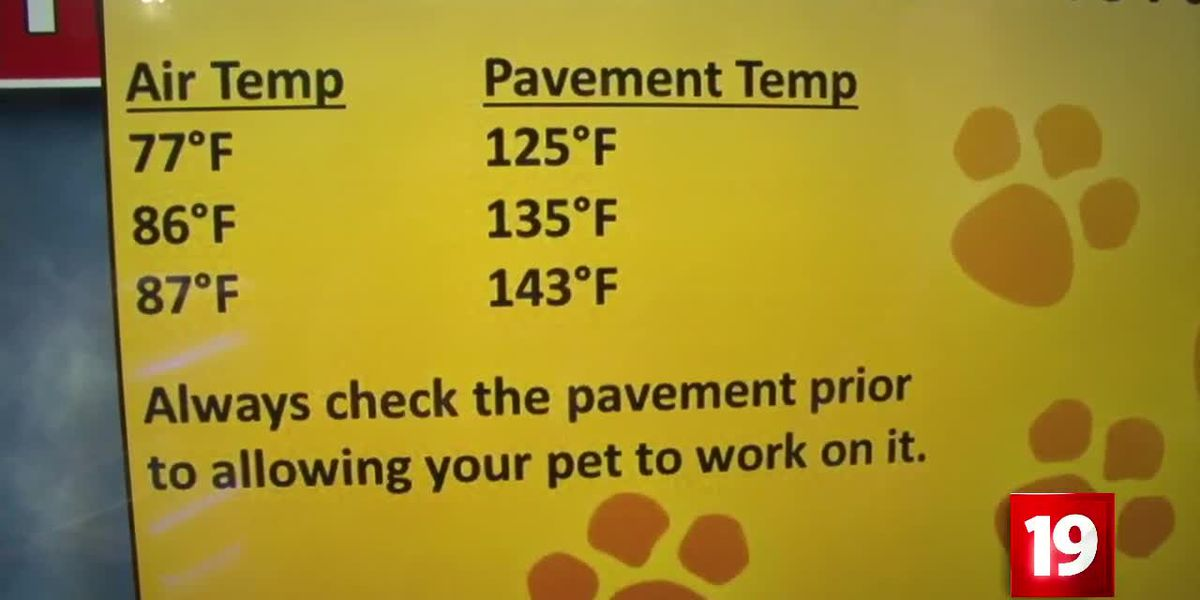 Heat stroke signs for both you and your pet as Northeast Ohio hits heatwave status