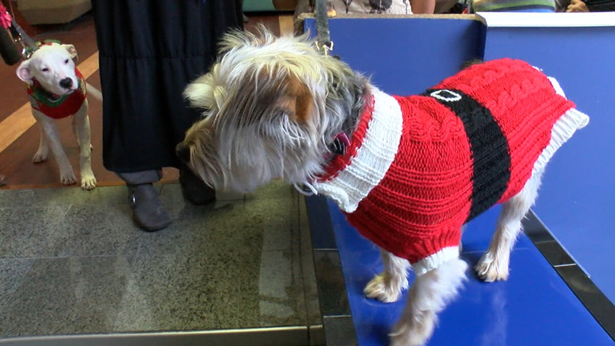 K9Cleveland hosts pooch-friendly holiday party