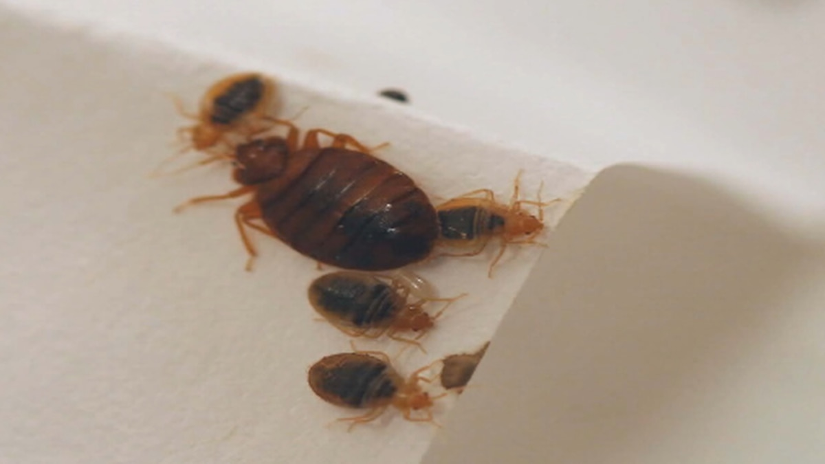 Parma Apartment Building Infested with bed bugs, residents say