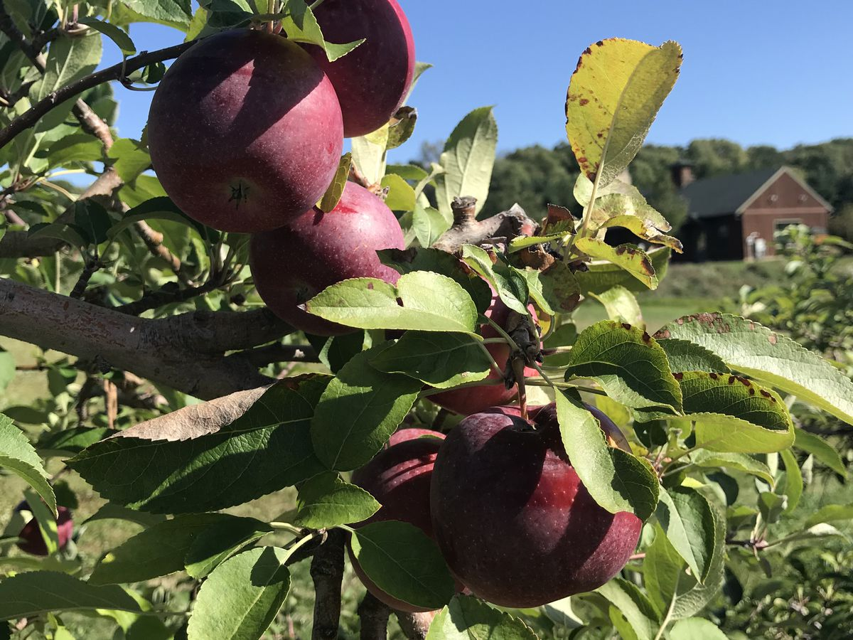 Patterson Fruit Farm enhances safety precautions as they help people celebrate the fall season