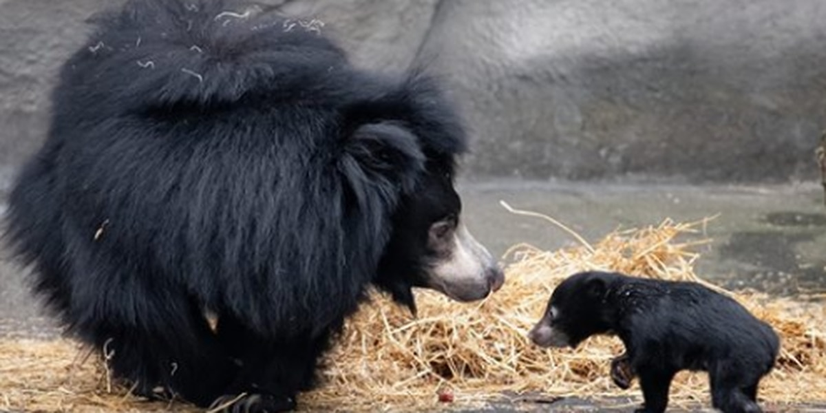 Mothers get into Cleveland Metroparks Zoo for free on Mother's Day