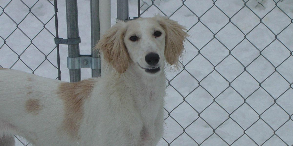 Woman needs help finding missing show dog in Summit County