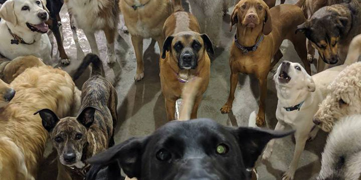 Best selfie ever? Pack of dogs at Ohio boarding facility pose for photo