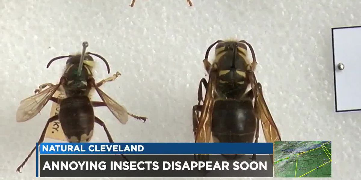 Stinging insects in Northeast Ohio about to die before winter