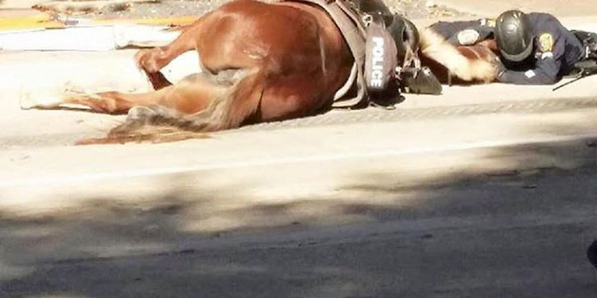 Officer comforts dying police horse after she was hit by car