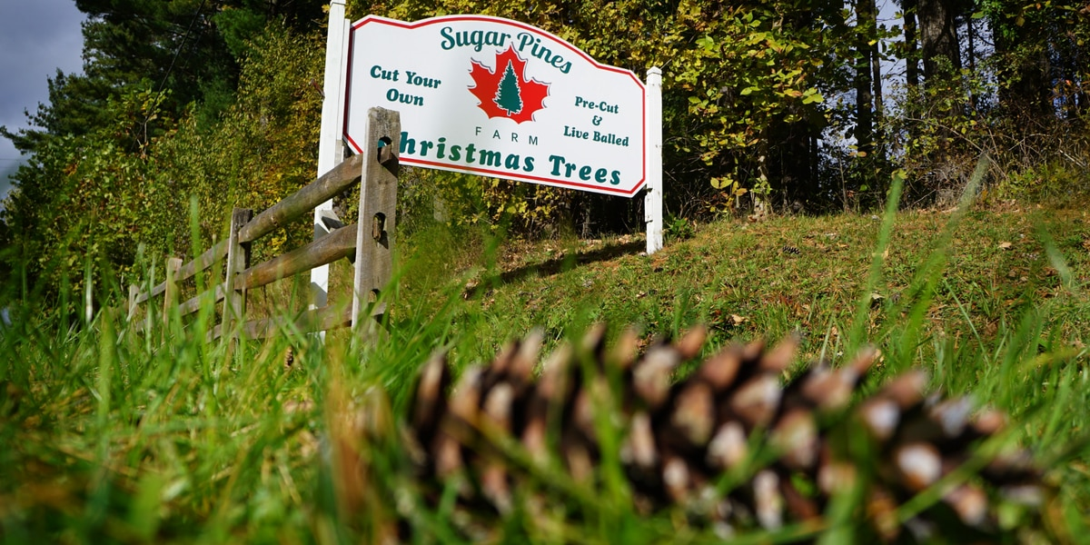 Find out what this Ohio Christmas tree farm does the other 11 months out of the year