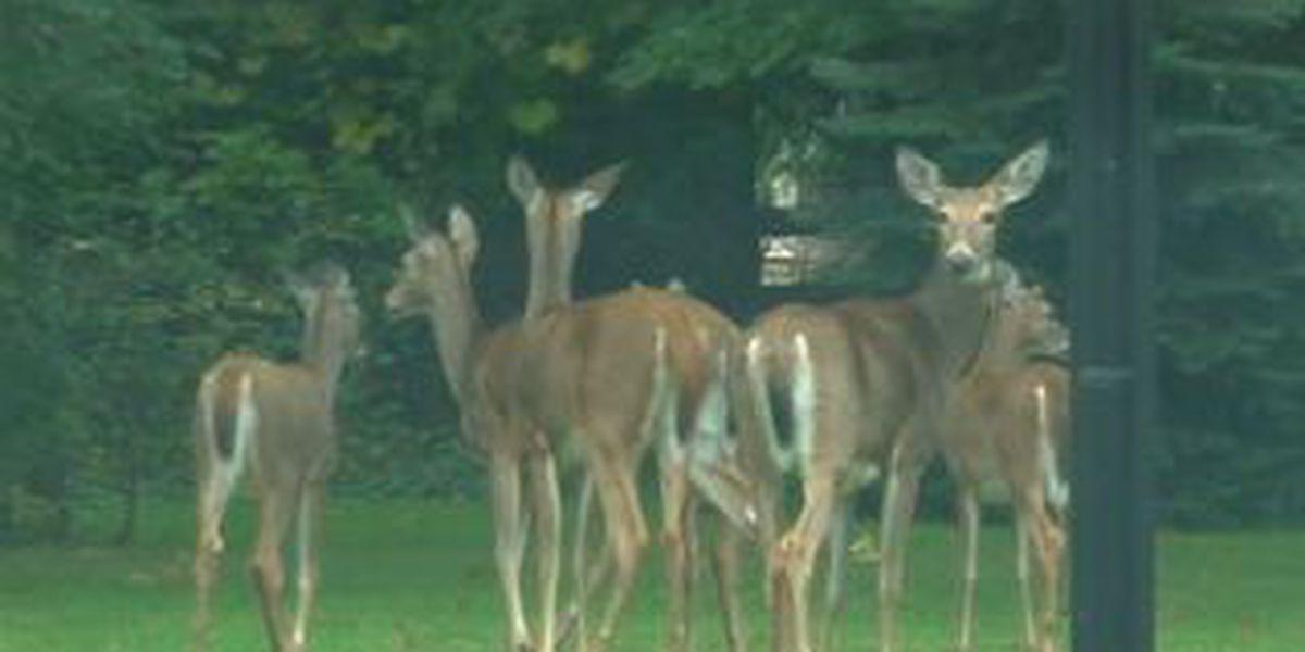 Avon Lake set to vote on new deer overpopulation legislation