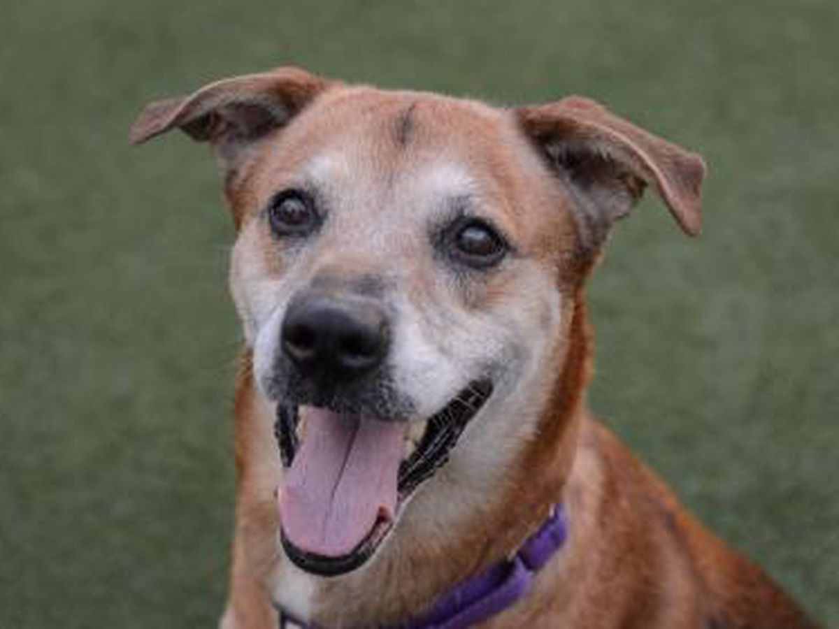 Cleveland APL Pet of the Week: Laid back Dougal the dog will be your furever buddy