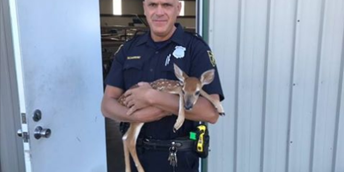 Willoughby Police Officer rescues a deer stuck in a fence