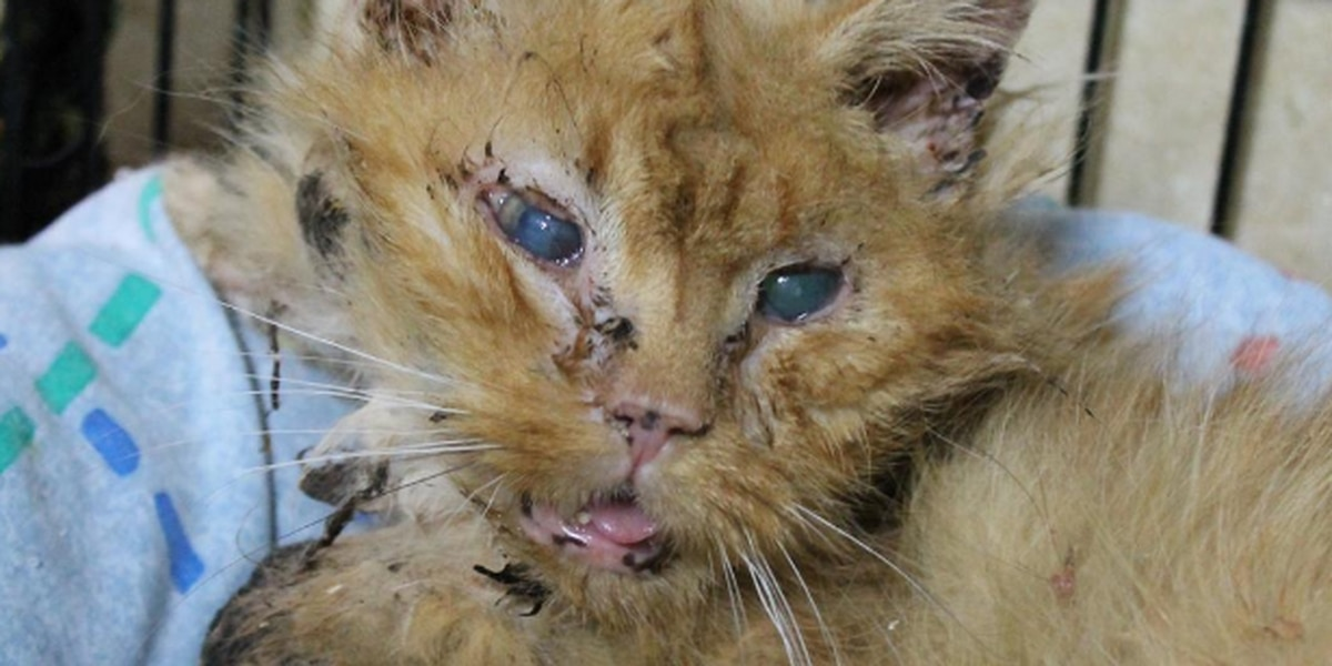 4 animal rescue workers convicted on 24 counts each of animal cruelty charges