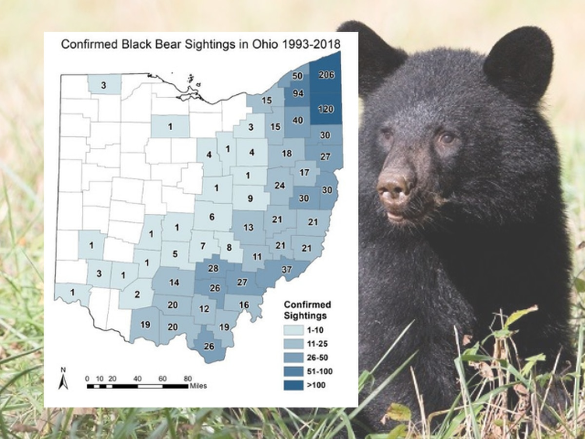 Wildlife officials expect more black bear sightings this summer in Northeast Ohio