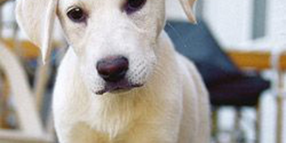 Ohio bill to prevent pet food from containing euthanized animal remains introduced
