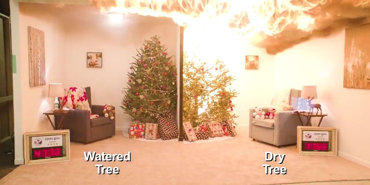 WATCH: Dry Christmas tree explodes into flames in seconds