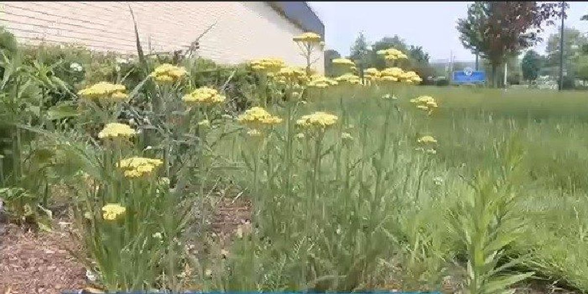 County officials give tips to clean green