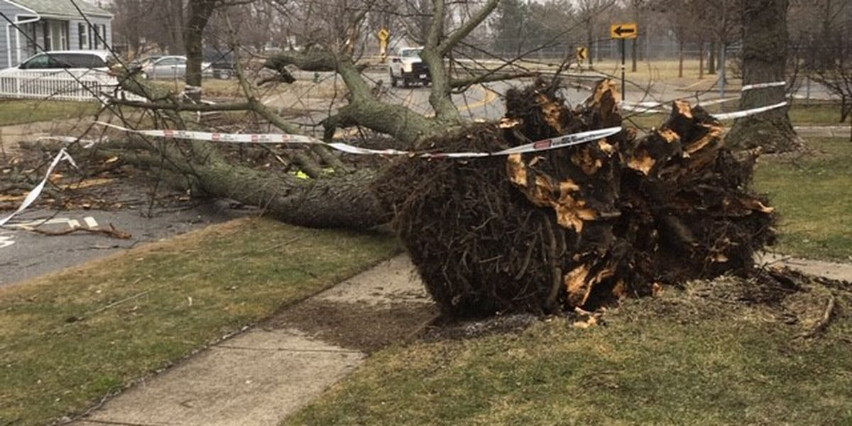 Here's how to inspect your trees to see if they're strong enough for Northeast Ohio's severe weather season