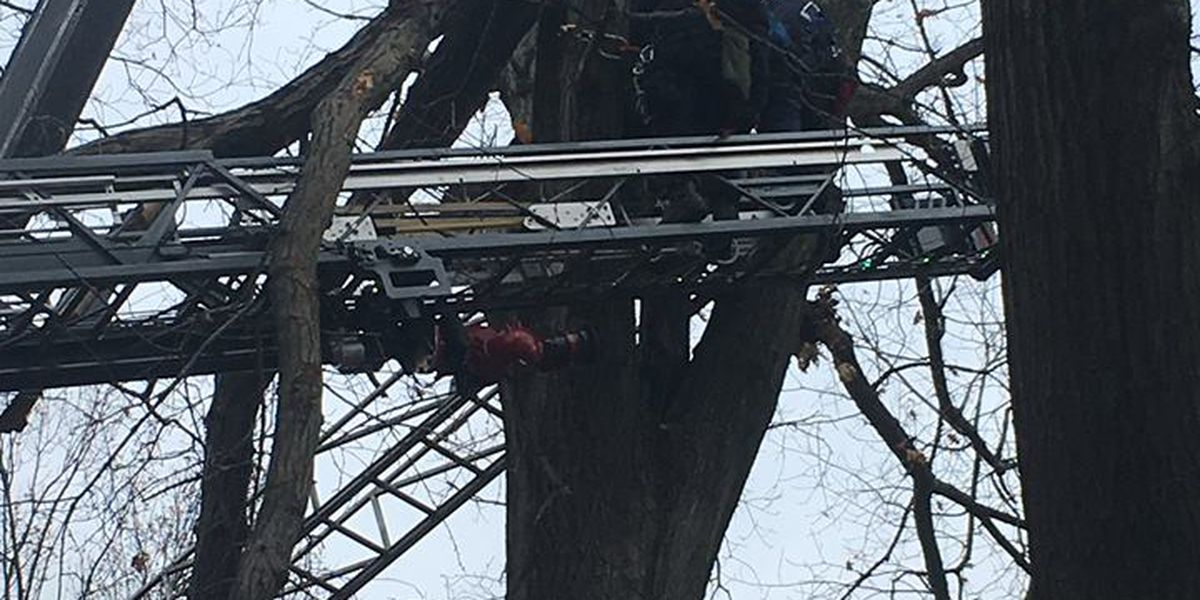 Cleveland Heights firefighters rescue injured arborist