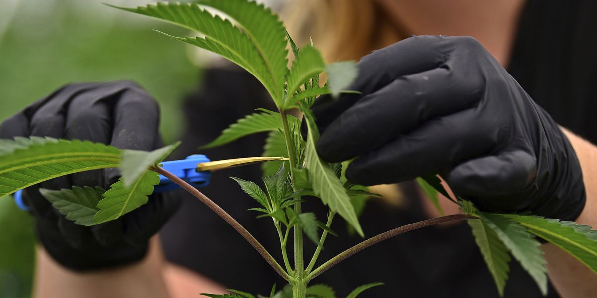 Coming soon: Medical Marijuana in Ohio, but how much will it cost?