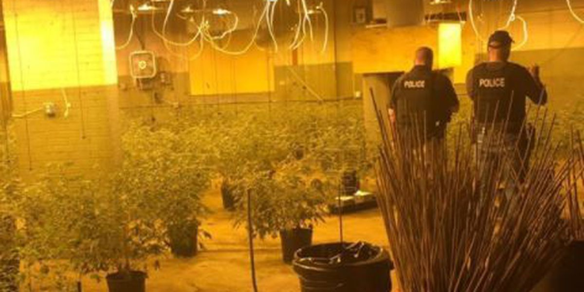 200-pound marijuana bust, Cleveland Police make arrest
