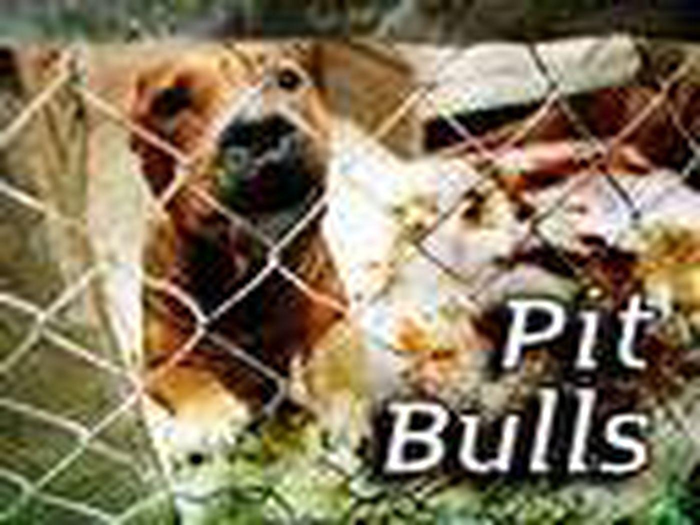 Police Crack Down On Underground World Of Dog Fighting