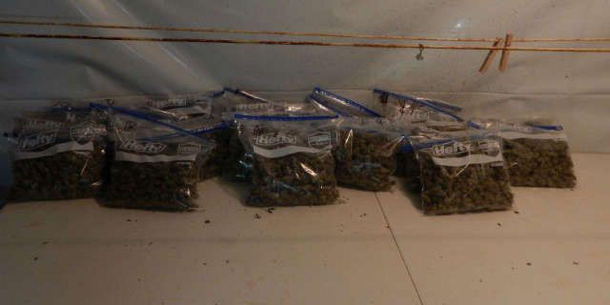 Marijuana grow operation busted up
