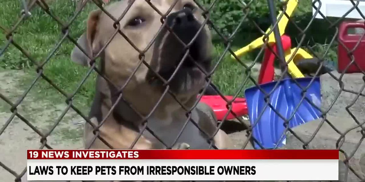19 News investigates: Why are repeat offenders still allowed to own vicious pets?