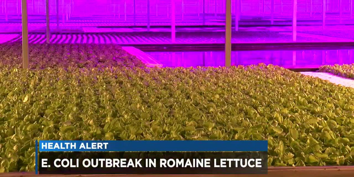 Cleveland grower supplying fresh, clean romaine as CDC warning rattles market