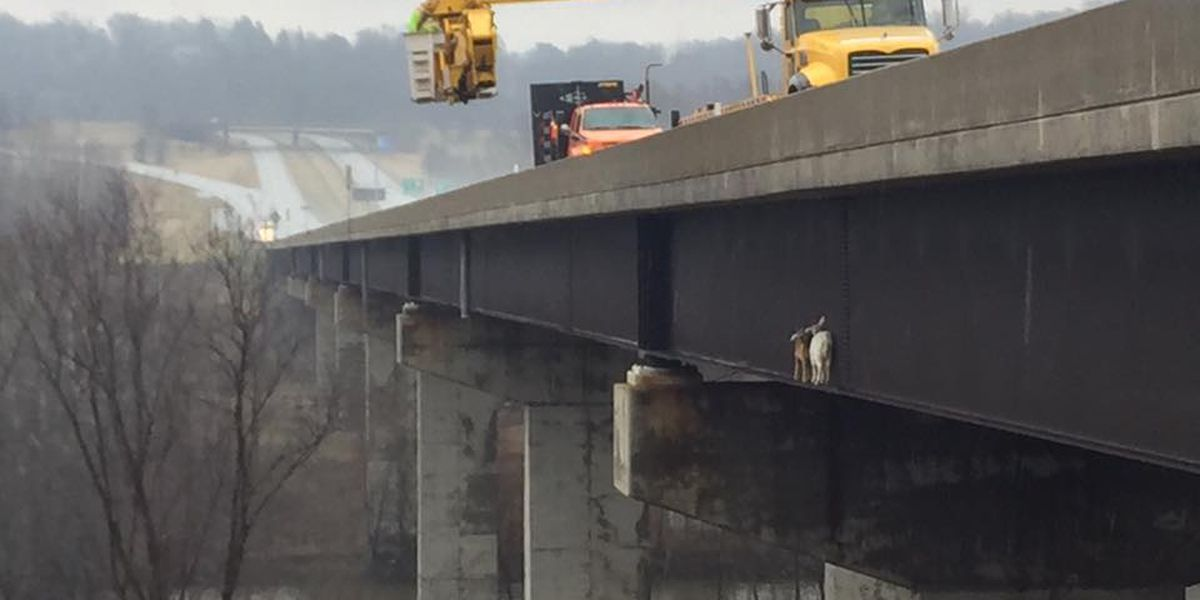 Pair of goats rescued from side of Pennsylvania Turnpike bridge