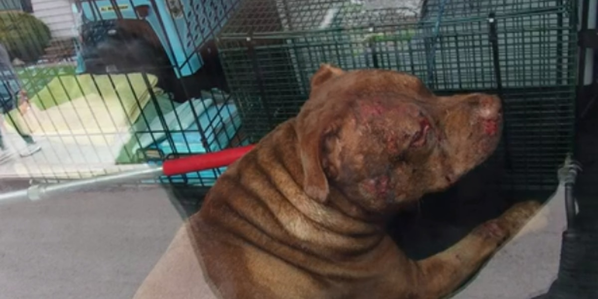 Family pit bull bites Parma woman after she tries to break up dog fight