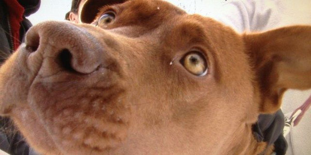 Social media post helps stray dog find home