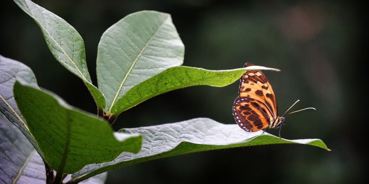 "Cleveland Botanical Garden daily butterfly release creates ""amazing"" experience"