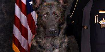 Geauga County K9 is safer now in part to a charitable donation