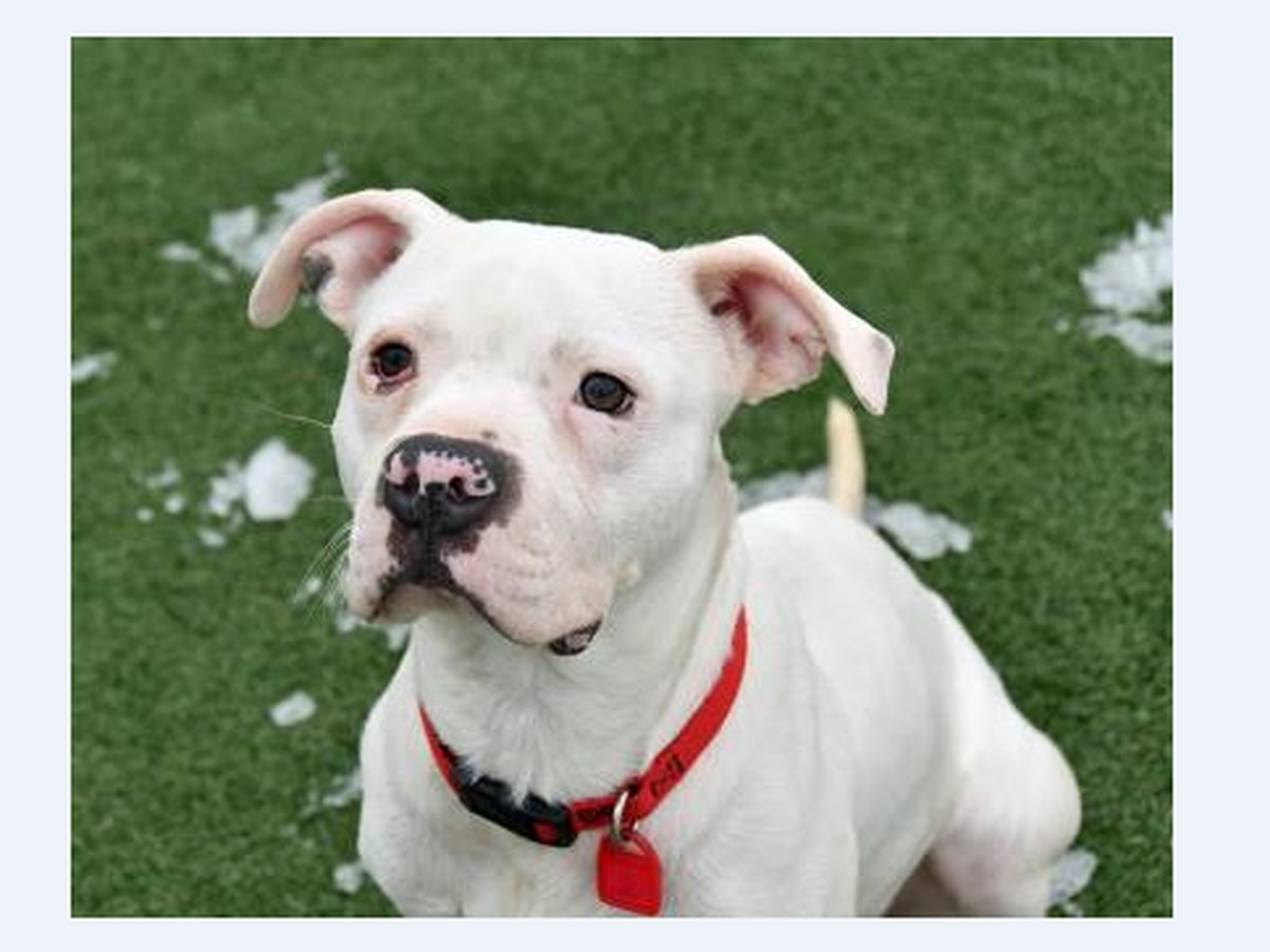 Cleveland APL Pet of the Week: Playful Gunther is in search of a Furever Home