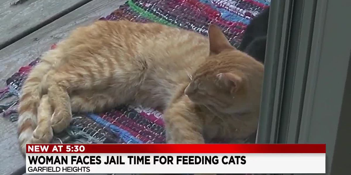Sunny Side Up: Jail time for feeding stray cats?