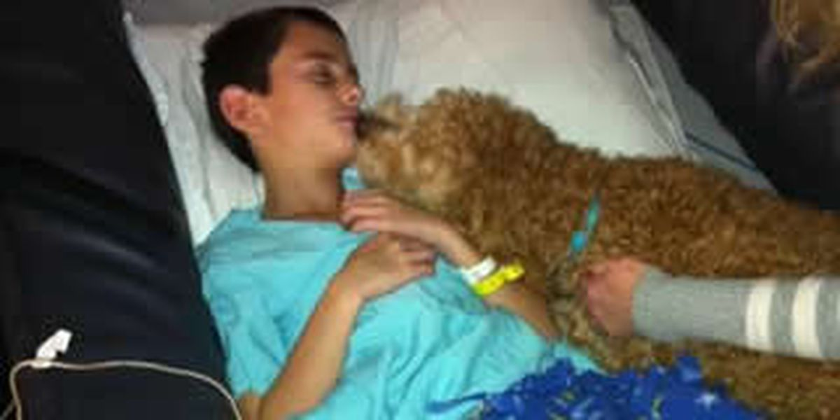 HEARTWARMING PHOTO: Pup lifts spirits of boy injured in accident