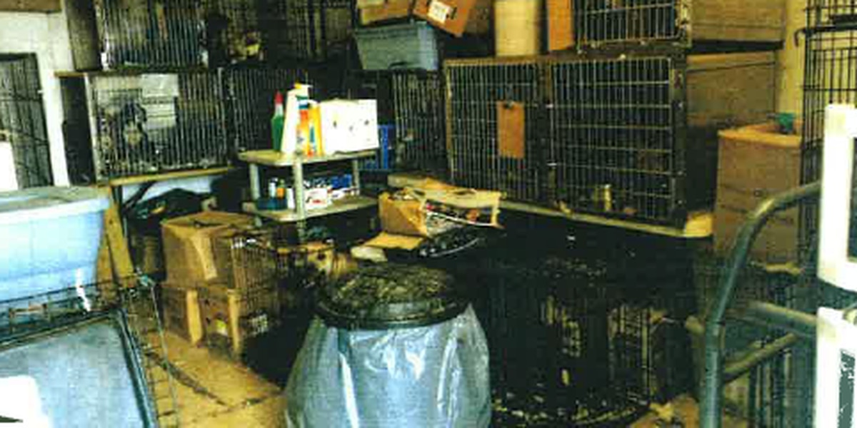 What happened to the 100 animals seized from the Eastlake rescue facility?