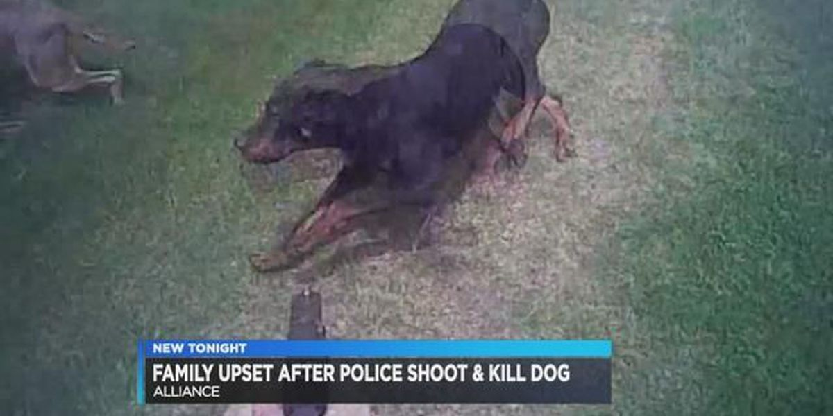Alliance police officer who fatally shot dog will not face charges