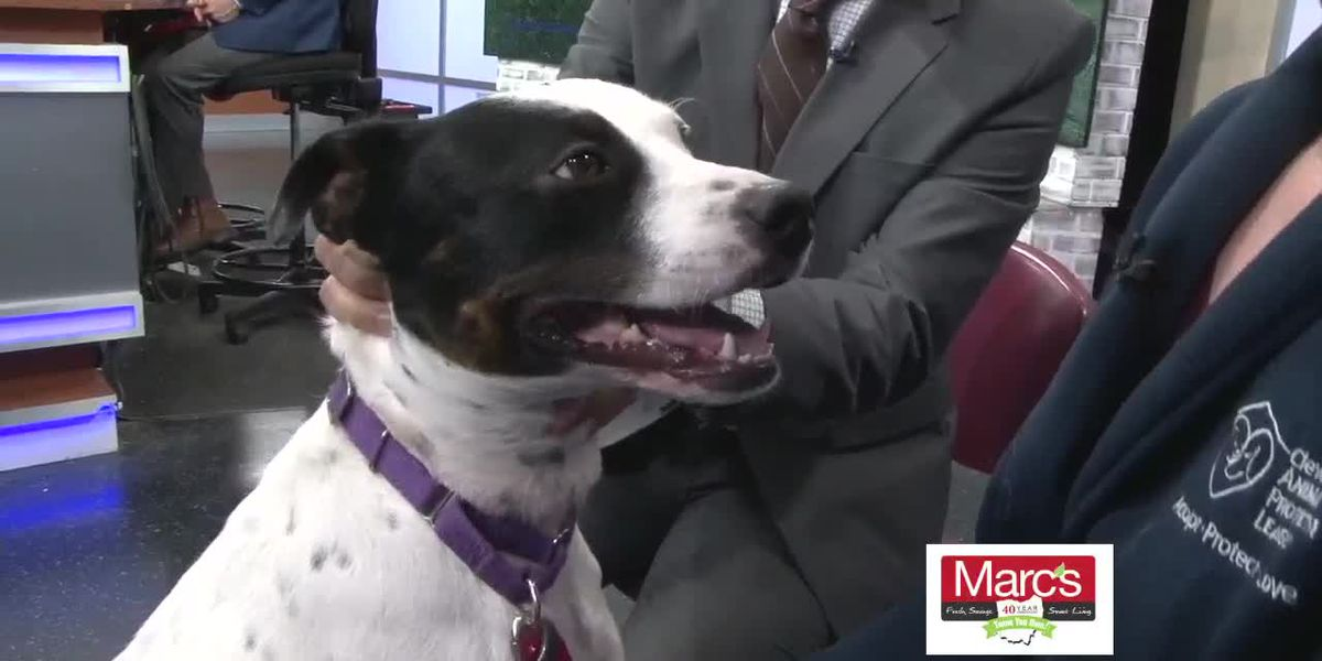 Cleveland APL Pet of the Week: Lively Gracie will keep you active this winter