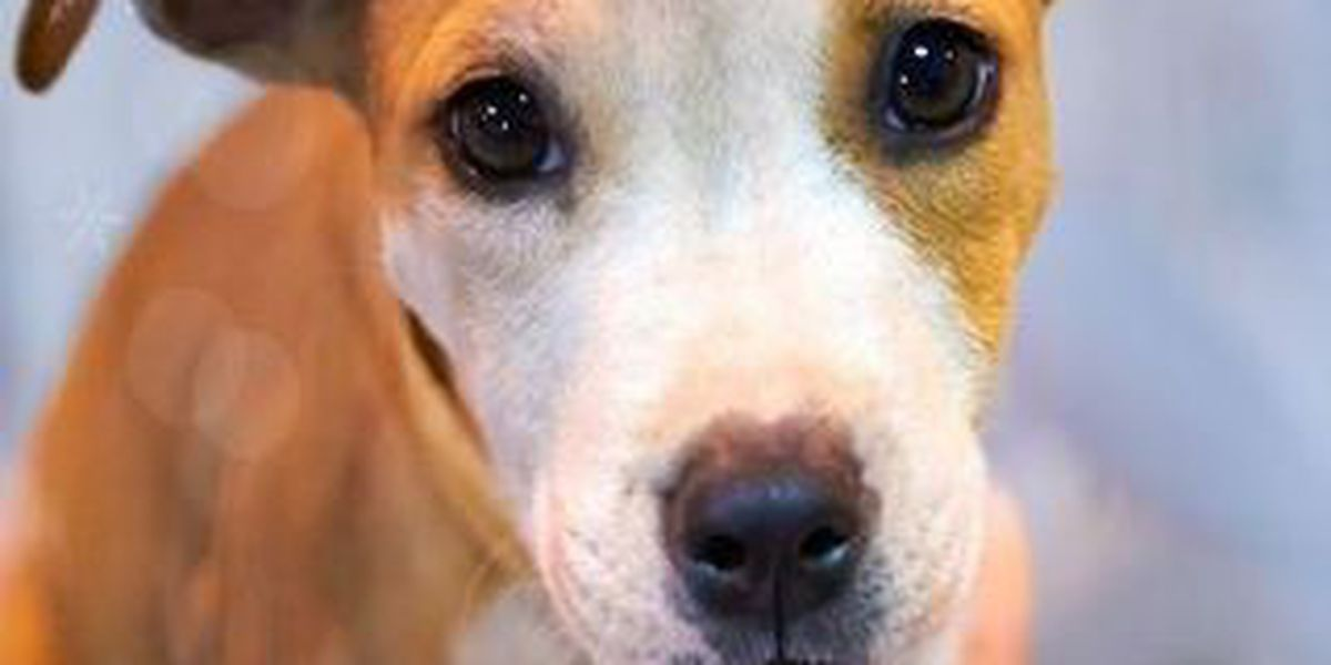 Lake & Geauga Humane Societies Co-Host Huge Adoption Event