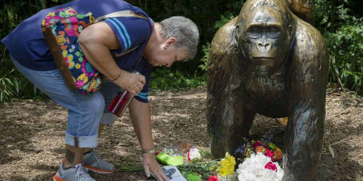 Cincinnati Zoo rejoins Twitter following Harambe controversy