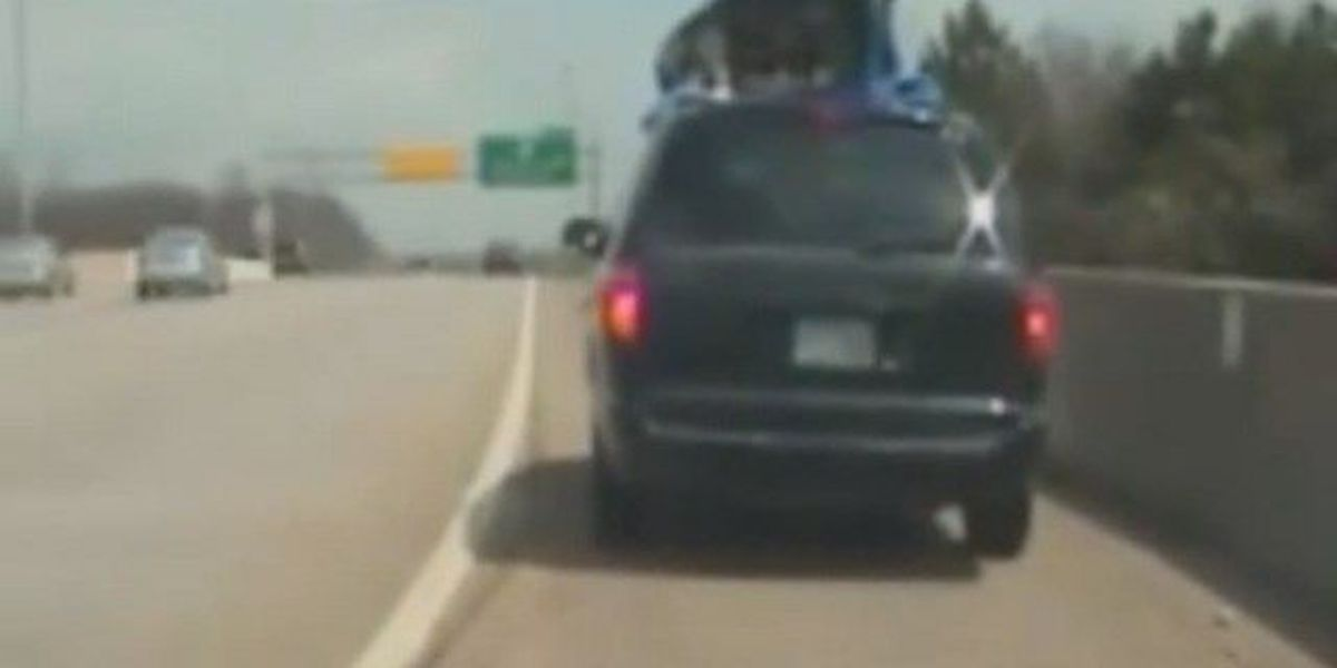 Puppies rescued from roof of moving vehicle