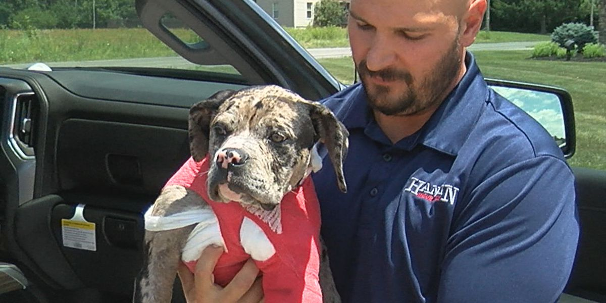 Puppy recovering after being shot near owner's home in Portage County