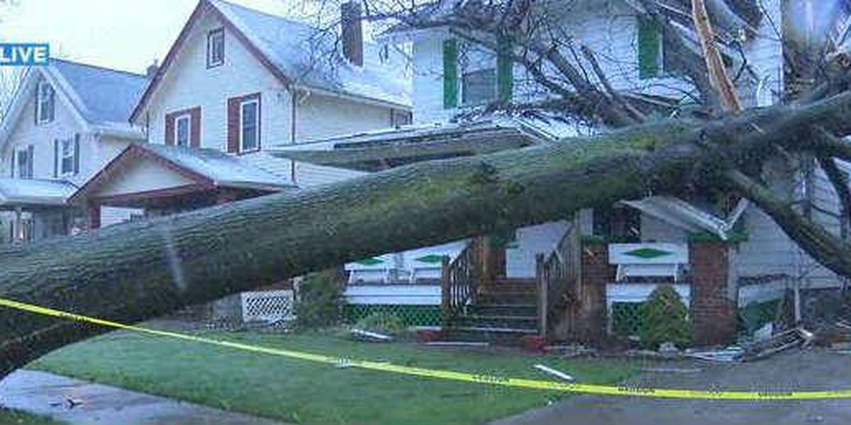 5,223 trees need to be removed in Cleveland