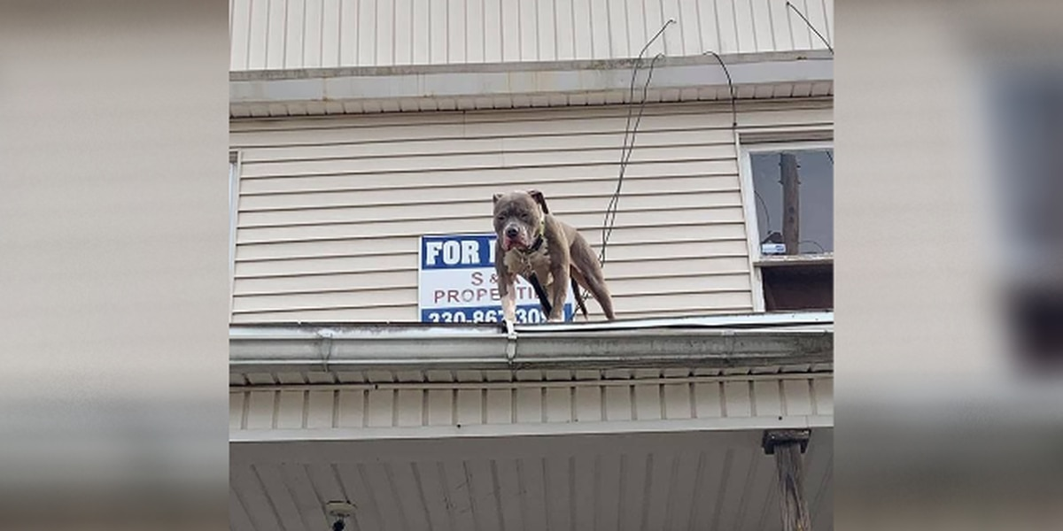 Rooftop dog raises questions among Akron residents