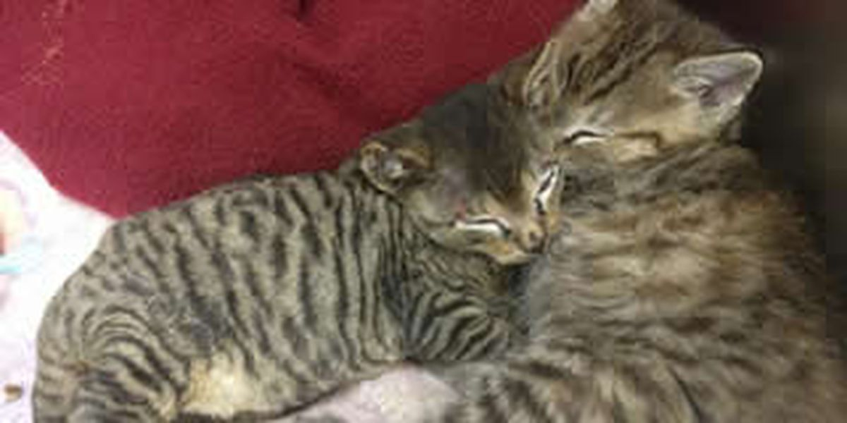 Kittens stuck, burned in furnace
