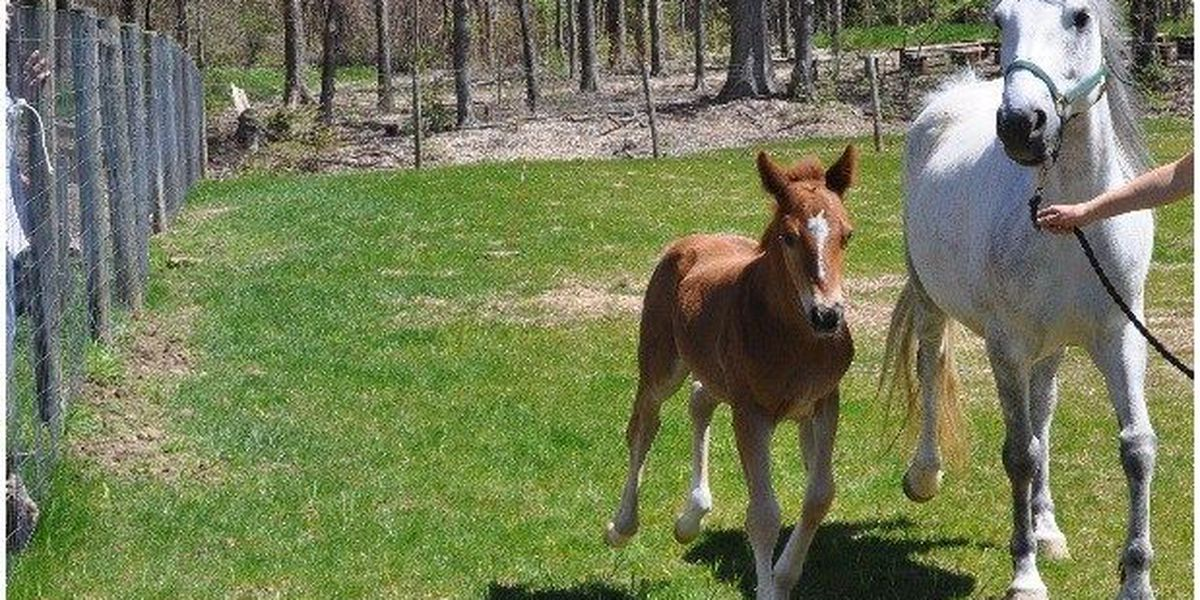 DONATE HERE: Rescued horse gives birth to colt