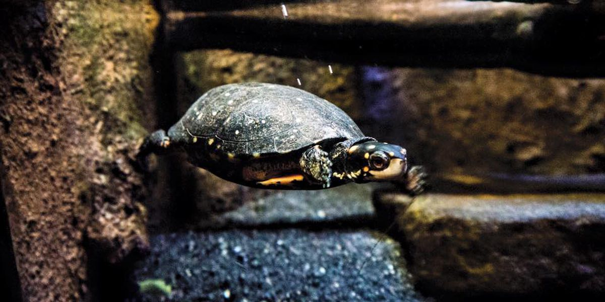 Save the turtles! Cleveland Aquarium, Terrestrial Brewing create chocolate caramel beer for the cause