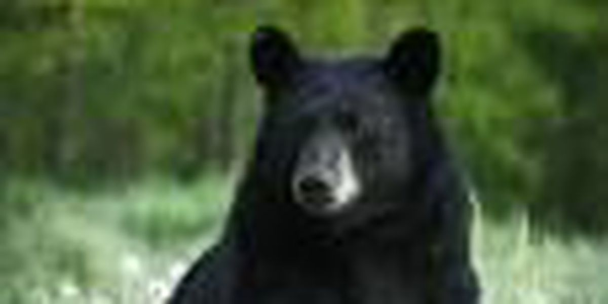 More than 200 black bear sightings reported in Ohio in 2012
