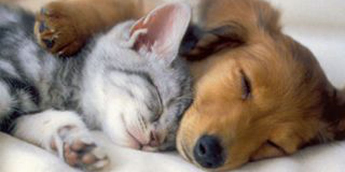 Grand Opening of PetSmart Charities Everyday Adoption Center