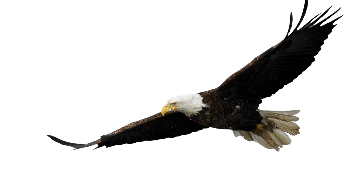 Bald eagles mounting a comeback in Northeast Ohio